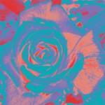 Gradroselightblue&rose